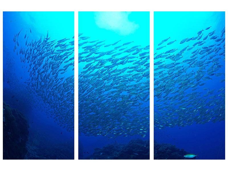 Poster 3-teilig Fischwelt