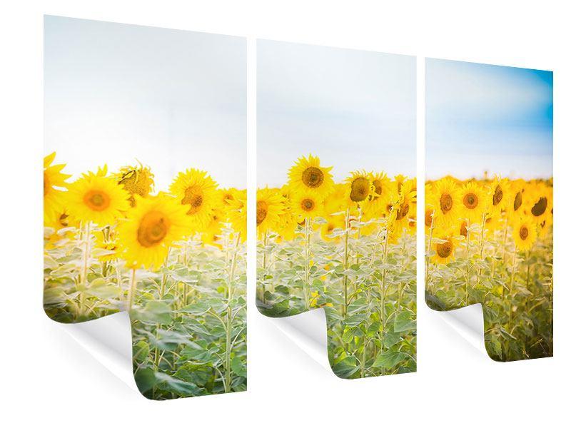 Poster 3-teilig Im Sonnenblumenfeld