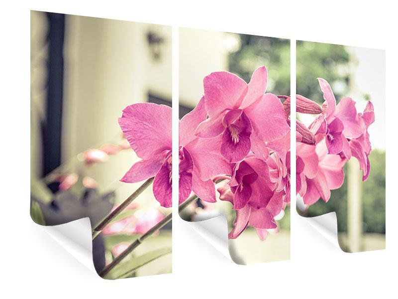 Poster 3-teilig Ein Fensterplatz für die Orchideen