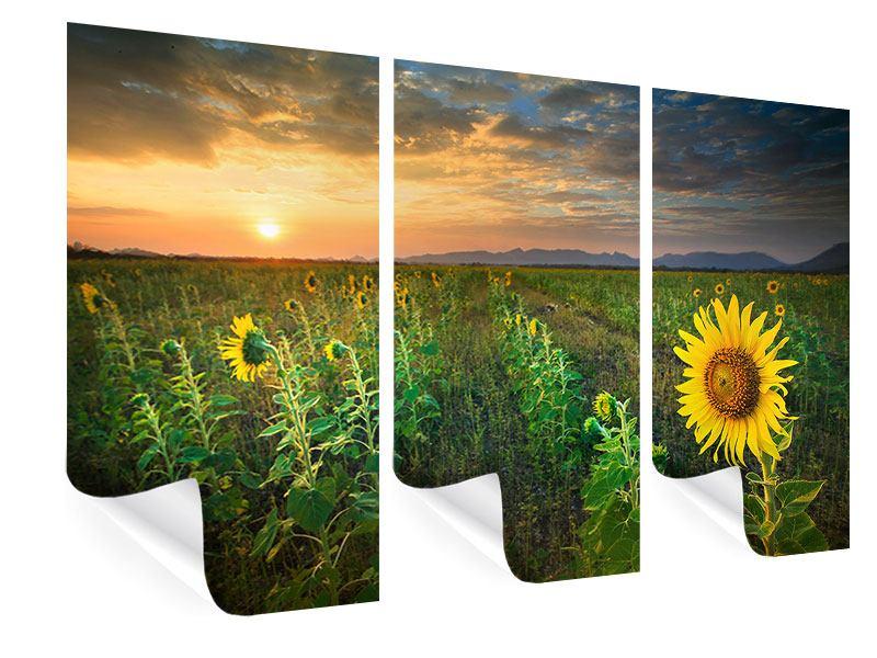 Poster 3-teilig Sonnenblumenfeld im Abendrot