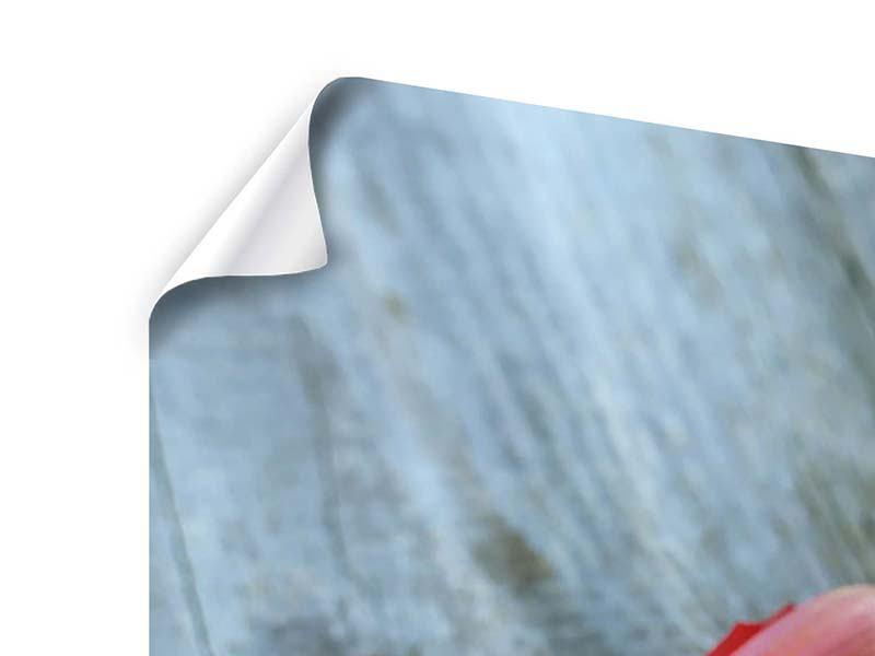 Poster 3-teilig Der rote Tulpenstrauss
