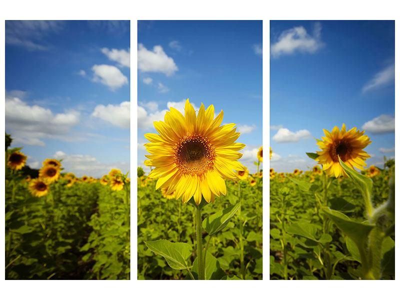 Poster 3-teilig Sommer-Sonnenblumen