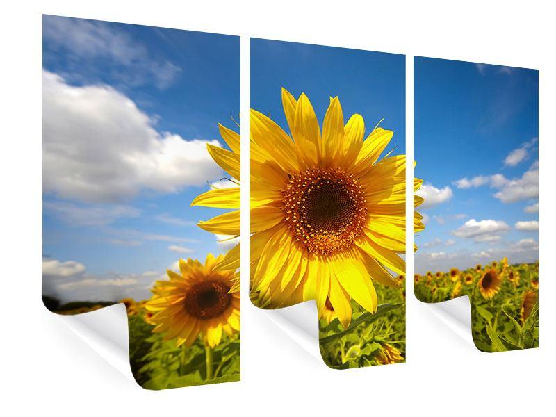 Poster 3-teilig Das Feld der Sonnenblumen