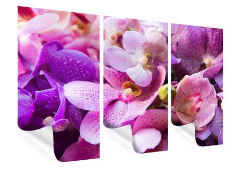 Poster 3-teilig Im Orchideenparadies