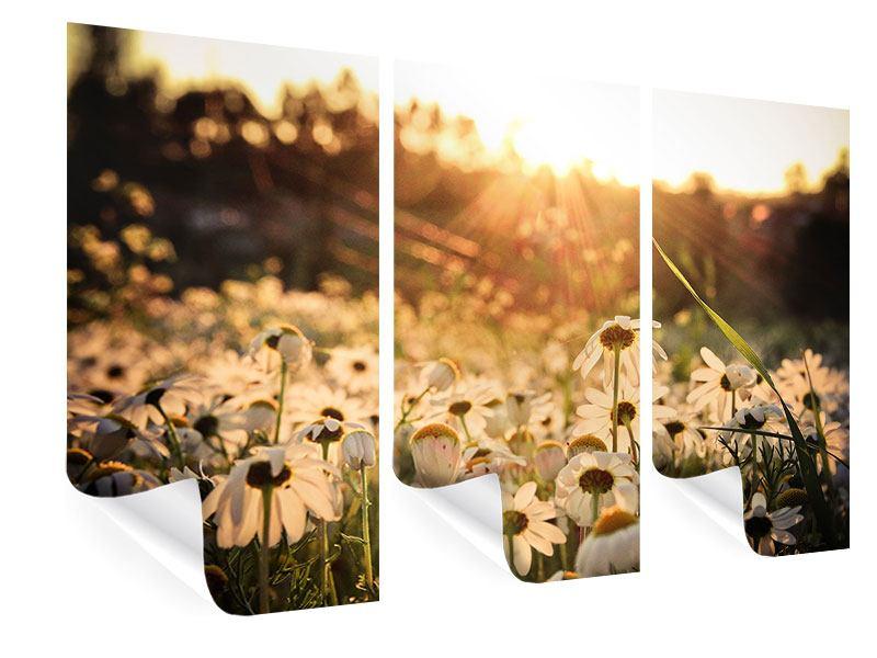 Poster 3-teilig Gänseblümchen bei Sonnenuntergang