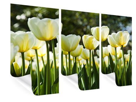 Poster 3-teilig Tulpen bei Sonnenuntergang