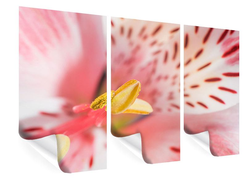 Poster 3-teilig Der Lilienstempel