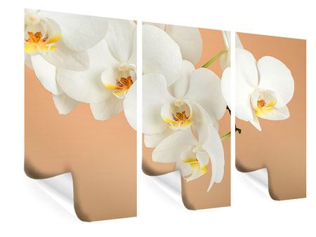 Poster 3-teilig Weisse Orchideenblüten