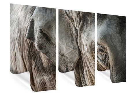 Poster 3-teilig Close Up Elefant