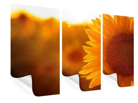 Poster 3-teilig Macro-Sonnenblume