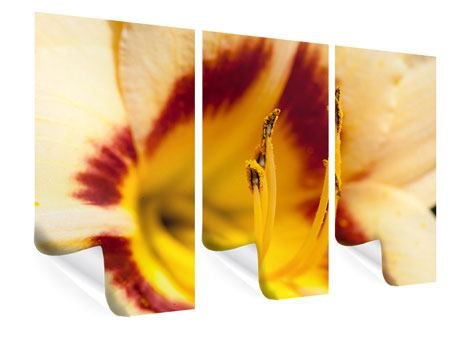 Poster 3-teilig Riesenlilie