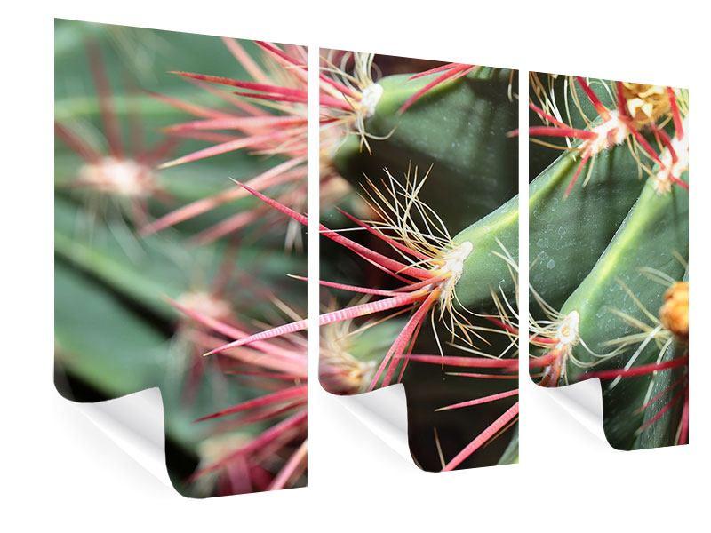 Poster 3-teilig Die Kaktusblüte