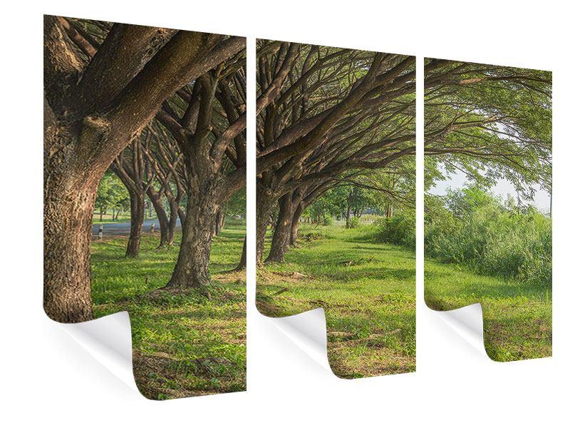 Poster 3-teilig Alter Baumbestand