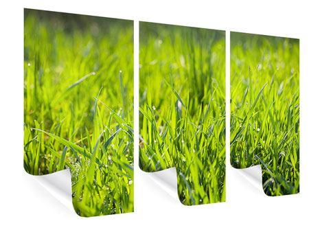 Poster 3-teilig Gras im Morgentau