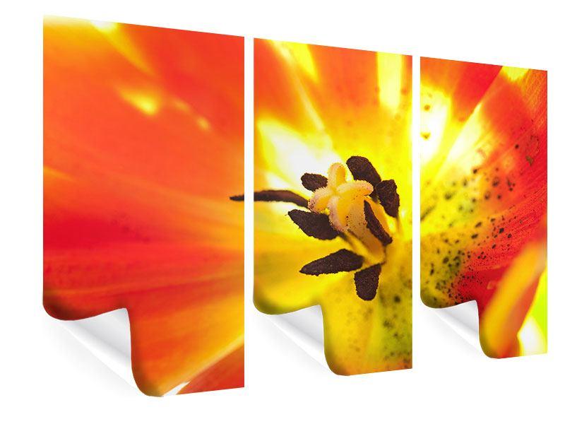 Poster 3-teilig Die Narbe einer Tulpe XXL