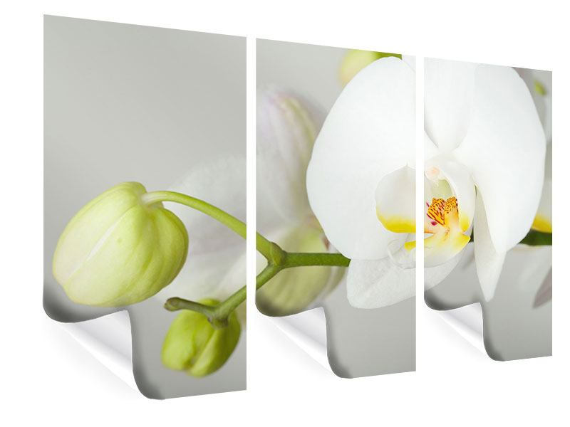 Poster 3-teilig Riesenorchidee