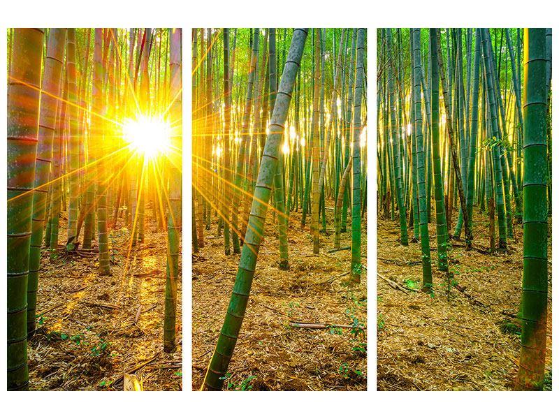 Poster 3-teilig Bambusse