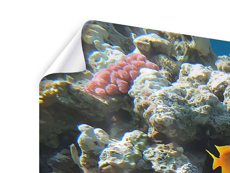 Poster 3-teilig Das Aquarium