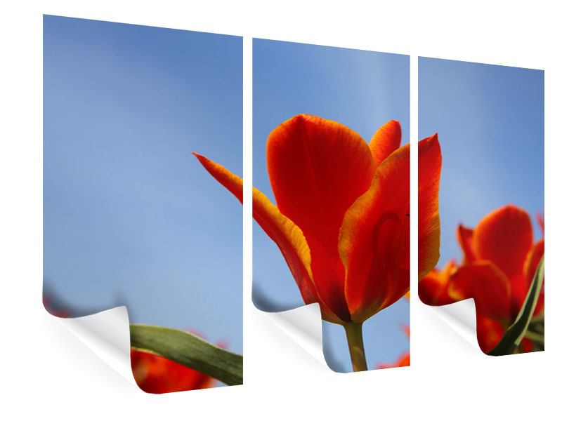 Poster 3-teilig Rote Tulpen in XXL