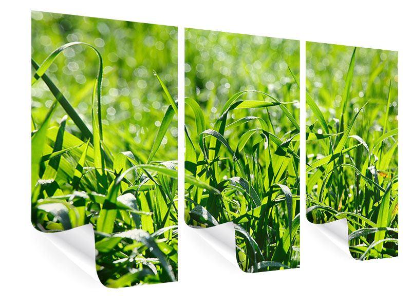 Poster 3-teilig Sonniges Gras