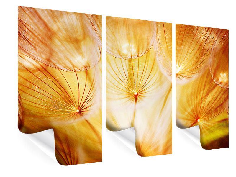 Poster 3-teilig Close Up Pusteblume im Licht