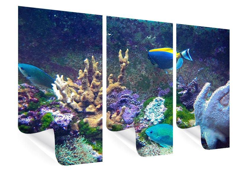 Poster 3-teilig Fische