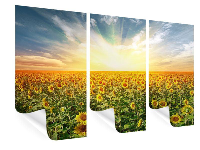 Poster 3-teilig Ein Feld voller Sonnenblumen