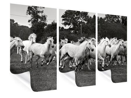 Poster 3-teilig Die Mustang Herde
