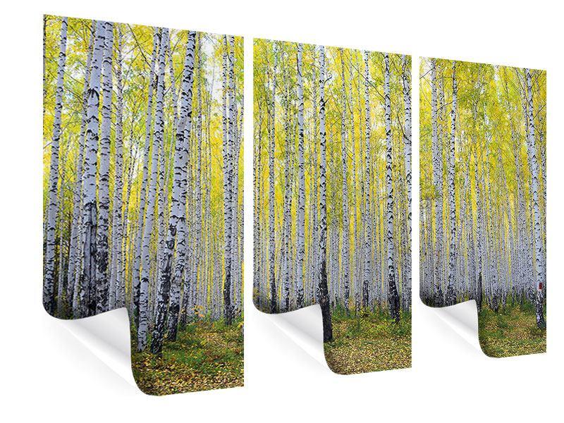 Poster 3-teilig Herbstlicher Birkenwald