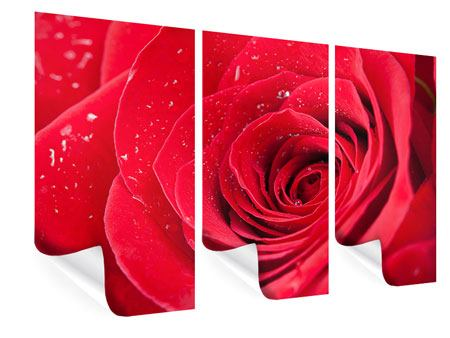 Poster 3-teilig Rote Rose im Morgentau