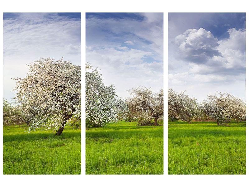Poster 3-teilig Apfelbaum-Garten