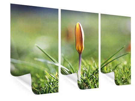Poster 3-teilig Die Blütenknospe