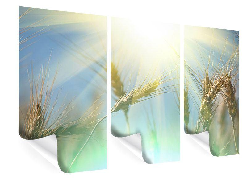 Poster 3-teilig König des Getreides