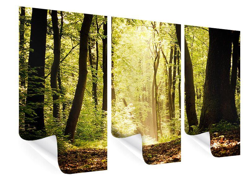 Poster 3-teilig Sonnenaufgang im Wald