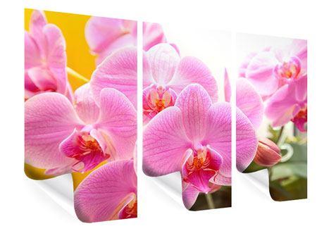 Poster 3-teilig Königliche Orchideen