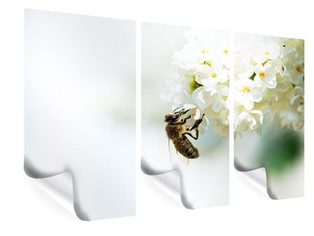 Poster 3-teilig Die Hummel und die Blüte