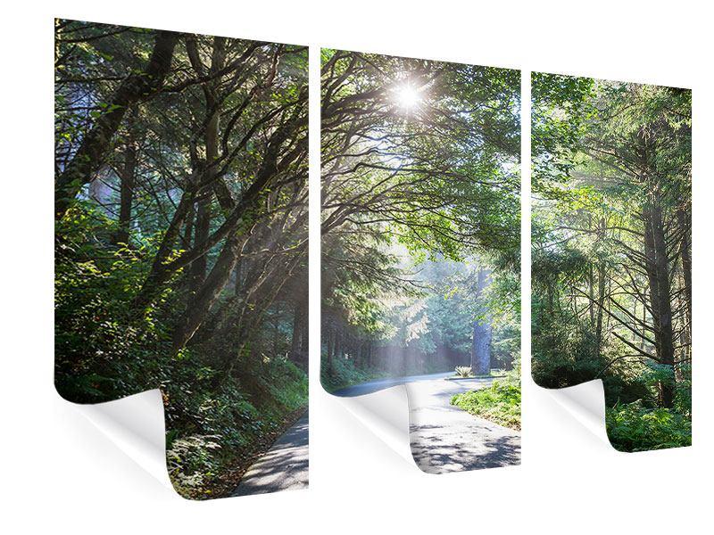 Poster 3-teilig Sonniger Waldweg