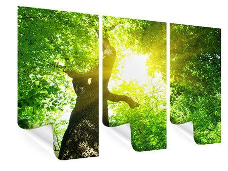 Poster 3-teilig Baum