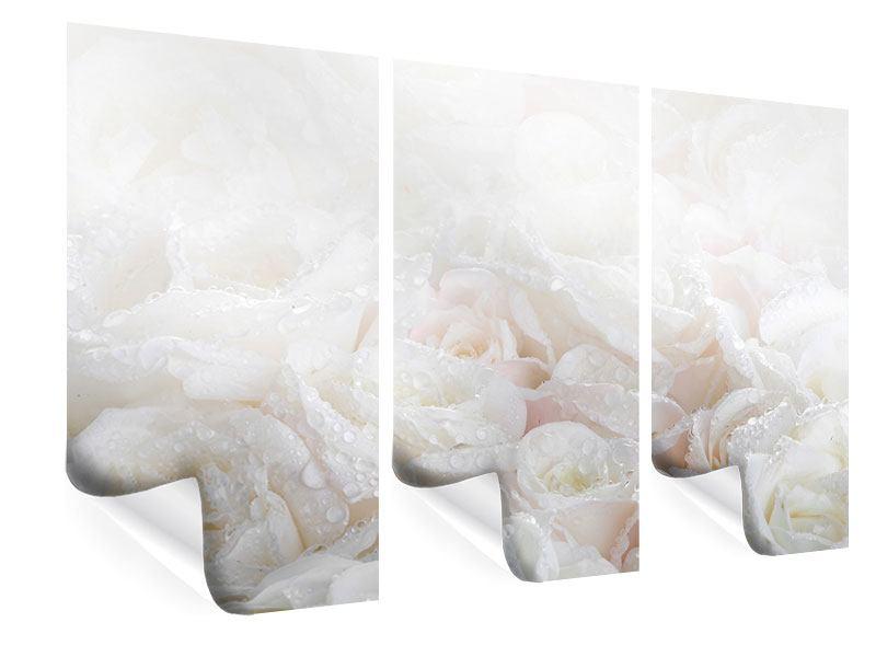 Poster 3-teilig Weisse Rosen im Morgentau