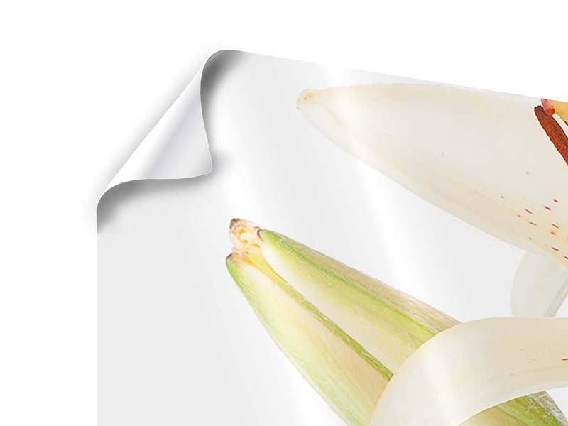 Poster 3-teilig Weisser Lilienstrauch