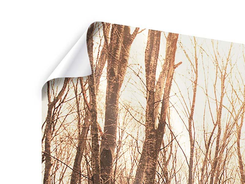 Poster 3-teilig Der kahle Wald