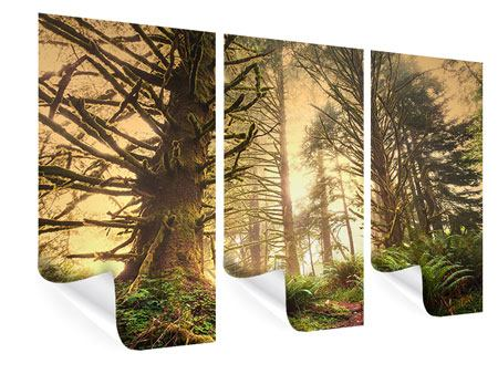 Poster 3-teilig Sonnenuntergang im Dschungel