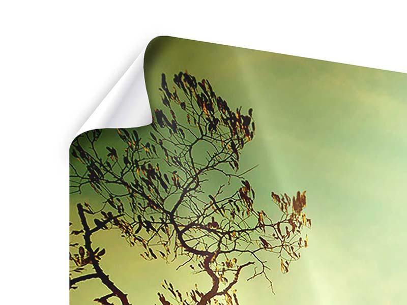 Poster 3-teilig Bäume im Herbst