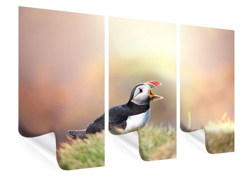Poster 3-teilig Der Papageitaucher