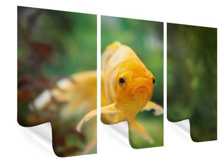 Poster 3-teilig Der Fisch