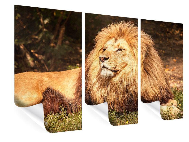 Poster 3-teilig Löwe