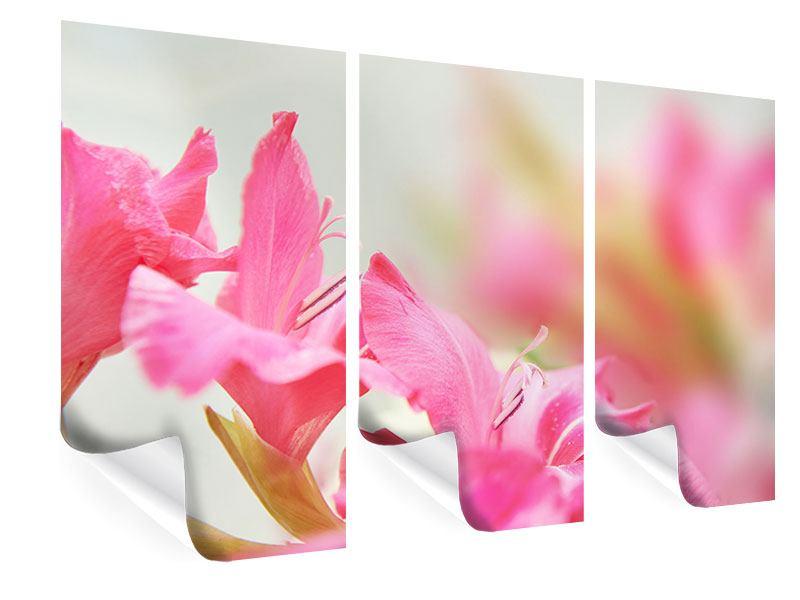 Poster 3-teilig Gladiolen