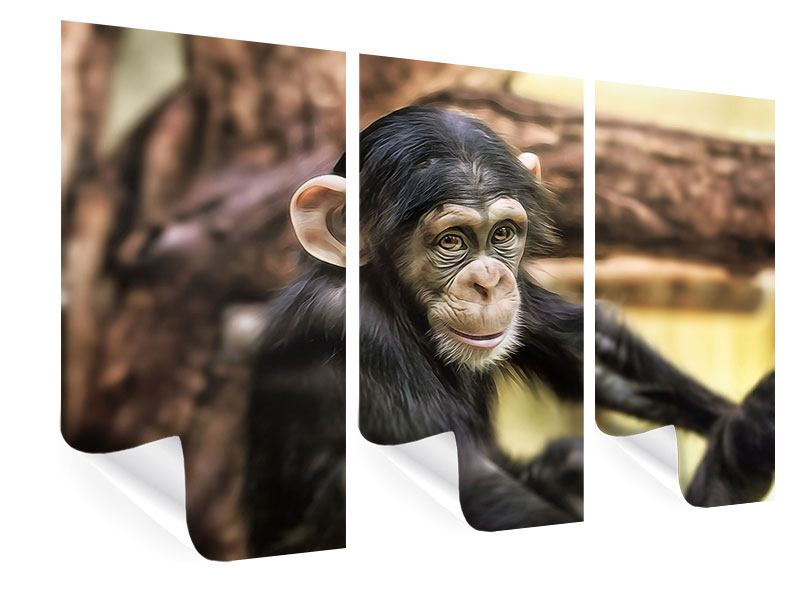 Poster 3-teilig Der Schimpanse