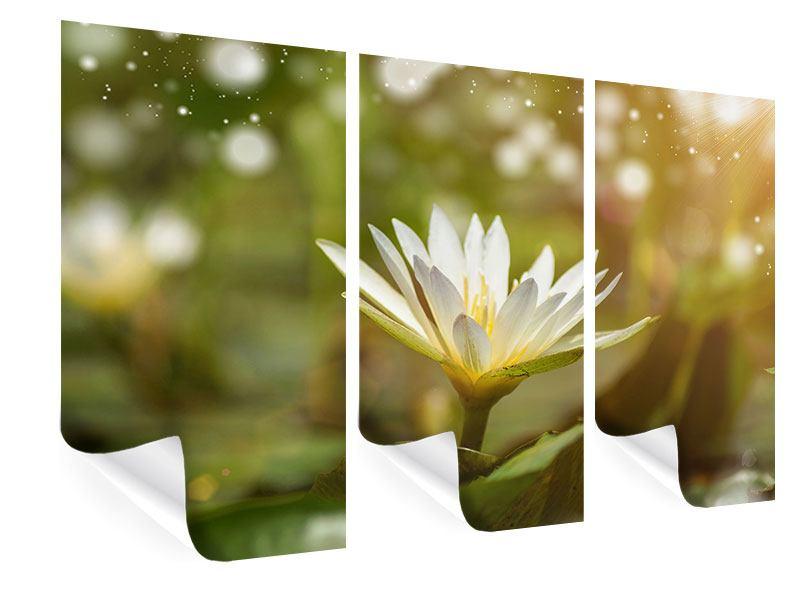 Poster 3-teilig Lilien-Lichtspiel