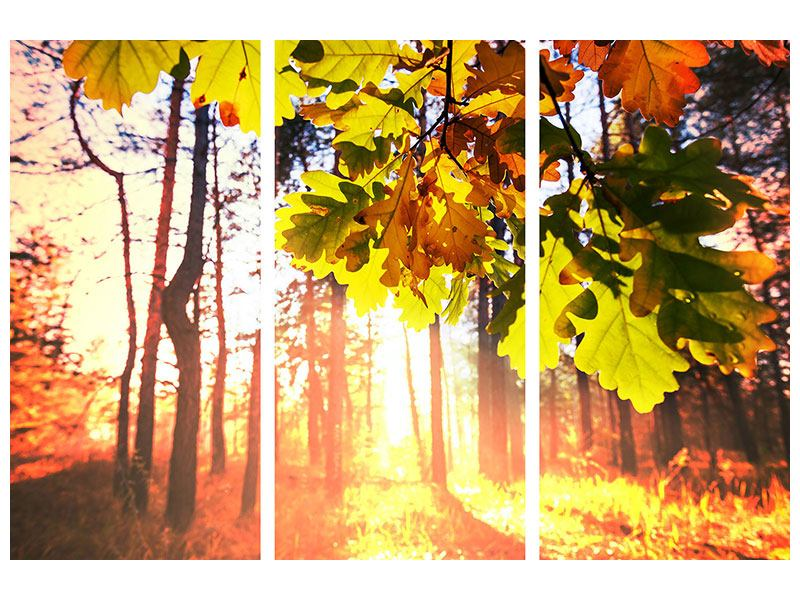 Poster 3-teilig Herbst